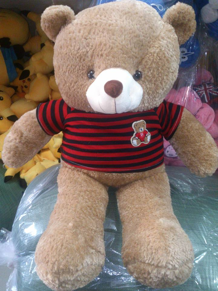 Teddy áo thun lông râu bắp new